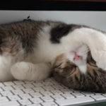 あざとい!寝相まで可愛い子猫