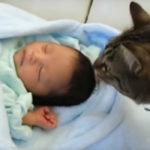 おっかなびっくりな赤ちゃんとの初対面
