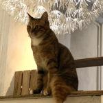 【猫カフェ】キューリグ(大名店)|保護猫たちに癒される