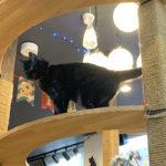【猫カフェ】cota|サービス満載の優しい猫カフェ