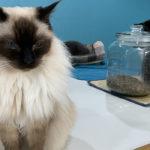 【猫カフェ】NYAON|お膝猫多めの大宰府の猫カフェ!