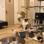【猫カフェ】Cat Cafe OBC|もっふり猫が集う福岡博多区の猫カフェ
