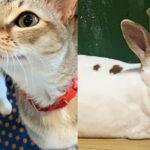 【猫&ウサギカフェ】ラビキャットん|珍しい猫とウサギのカフェ!