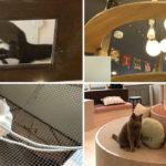 福岡の猫カフェ一覧!アクセス良好の癒しスポット!