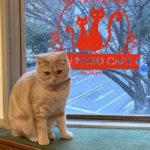 【猫カフェ】syu neko cafe|大川家具コラボ空間で猫と遊ぶ!