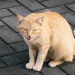 保護猫・猫ボラって何?野良猫は問題なの?