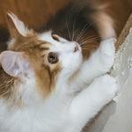 猫に引っ掻かれる「だけ」で発症!?ネコ引っかき病って知ってる?