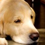 ペットロスは残された犬猫にも起こる!?多頭飼いの場合の対処法