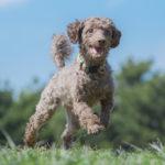 犬とのおでかけにぴったりな移動手段と注意点