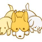 【フリー素材】短足ズ(ダックス、コーギー、ペキニーズ)のイラスト