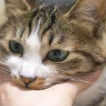 【観るストレス解消法】猫撫でてるだけで癒されるらしいから動画集めてみた