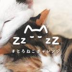ツイッター・インスタ投稿でカンタン保護猫サポート!現在の投稿数も見れるよ!