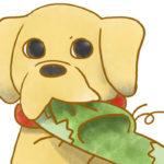 【フリー素材】イタズラ犬
