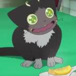 「青の祓魔師(青エク)」の「クロ」は猫の種類で言うとなんだろう?