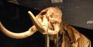 意外過ぎ!骨格と実際の姿のギャップがありすぎる動物