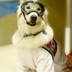【ペット用装備】防護服を着てお仕事するゴールデンレトリバー