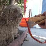 【ハンバーガーで犬を救う】アメリカでの保護活動記録動画