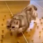 【犬にはできない】猫の高レベル特殊スキル「障害物避け」動画