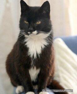 最長齢の猫さんは何歳?ギネスにも載ったクレーム・パフさん