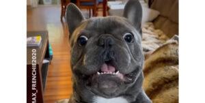 いつでも全力な犬たちがキュートでラブリーな動画集