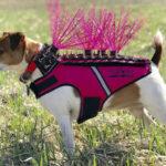 【ペット用装備】犬の服にトゲトゲスパイク!世紀末覇者風の服が犬たちを守る?