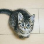 【ペットのお名前】犬や猫に「食べ物の名前」を付けたくなる?美味しそうなお名前選手権