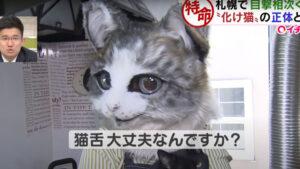 札幌市で化け猫が出現!?その正体は!?