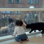 【やさしいせかい】窓拭きおじさんと猫と赤ちゃん、みんな可愛い幸せ空間