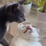 「猫は液体」を証明できちゃう動画と研究論文について