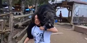 【動物園の日常】営業終了後、部屋に戻る動物たちの違いがすごい