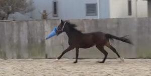 住宅街ど真ん中の放牧場でカラーコーン振り回す馬さんが可愛すぎる