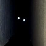 ちょっとホラー?闇夜に光る子猫の瞳