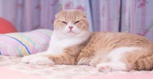 科学的に証明された、猫と仲良くなる方法