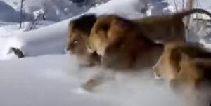夏に涼しい動物動画