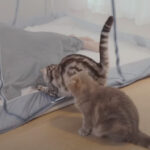 夏だ!猫飼いさん、蚊帳を導入したところ案の定…