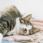 【動物の睡眠時間】犬や猫、他の動物は何時間寝るの?