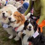 【大型犬好き必見】デカ犬大集合イベントの様子