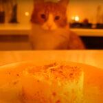 【猫専用】手作りご飯 VS キャットフード【検証動画】