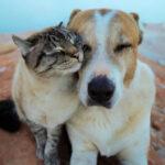 【相棒といつも一緒】最高に仲良しな犬猫コンビの旅
