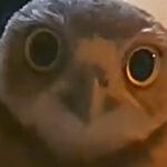 【監視カメラ映像】新築祝いに来たフクロウたち