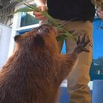 【ペタペタ】水族館をビーバーとお散歩【ペタペタ】