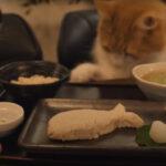 【猫専用】焼き魚定食が美しすぎる件