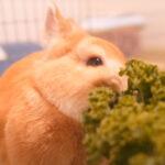 【ASMR】ウサギ氏「むしゃむしゃしてやった」【癒し】