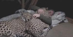 【モフモフ天国】ベタ慣れチーター達と一緒に寝てみた