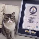 【祝】日本の大人気猫「もちまる」さん、世界ギネス記録に認定!!