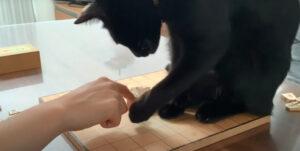 ネコ様との将棋崩しをやってみた結果…