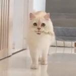【猫からの贈り物】ネコ様の可愛い特技紹介