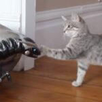 【お家に変な奴が来た!】ねこVS恐竜ロボット