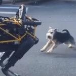 ロボット犬に出会った犬はどういう行動をとるのか