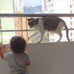 ベビーシッター猫さん「ここは危ないからダメよ」